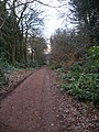 Deffer Woods track to summerhouse - geograph.org.uk - 1115368.jpg