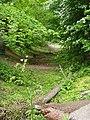 Dene Woods, Cottingham - geograph.org.uk - 805668.jpg