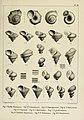Description des mollusques fossiles qui se trouvent dans les grès verts des environs de Genève (9522593037).jpg