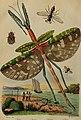 Dictionnaire pittoresque d'histoire naturelle et des phénomènes de la nature (1838) (14758181786).jpg