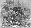 Die Gartenlaube (1884) b 625.jpg