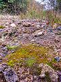 Ditrichum plumbicola habitat.jpg