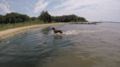 Dog Playing at Quiet Waters Park in Anne Arundel County Maryland.png