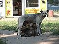 Dogs in Odessa.jpg