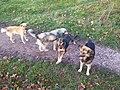 Dogs in Turbiv.jpg