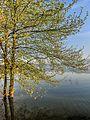 Dojran Lake 178.jpg