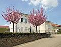 Dommartin-sur-Vraine, Mairie.jpg