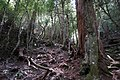 Dove Lake Circuit Walking Track, Cradle Mountain - Lake St Clair National Park 52.jpg