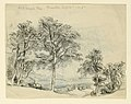 Drawing, Sketches. Maples, September 1917 (CH 18369013).jpg