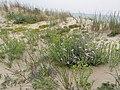 Dune à Montalivet - panoramio.jpg