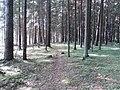 Dusetų sen., Lithuania - panoramio (117).jpg