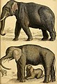 Edinburgh journal of natural history and of the physical sciences (1839) (20543514484).jpg