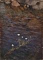 Eero Järnefelt - Pond Water Crowfoot and Shorestones.jpg
