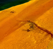 NASA photo of El Aaiún