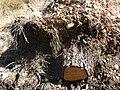 Embalse-de-Bornos-P1420705.jpg