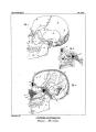 Encyclopédie méthodique - Systeme Anatomique, Pl19.png
