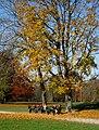 Englischer Garten Herbst-2.jpg