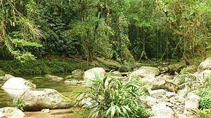 Santa Marta montane forests - Primary forest in Sierra Nevada de Santa Marta