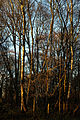 Epping Forest High Beach Waltham Abbey Essex England - trees 02.jpg