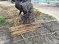 Establishing a nursery bed in Rhino Camp.jpg