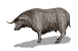 Euceratherium - Restoration