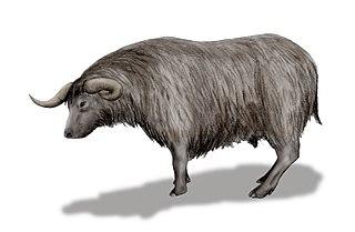 <i>Euceratherium</i>