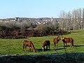 Excideuil chevaux.JPG