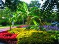 Exotische Bepflanzung am Weg.jpg