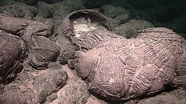 Expl6414 - pillow lava in Galapagos Rift.jpg