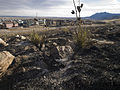 FEMA - 39774 - Burned area in Colorado.jpg
