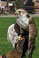 Falcon (7740418378).jpg