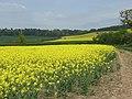Farmland, Westcott - geograph.org.uk - 414525.jpg