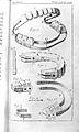 Fauchard, Le chirurgien dentiste, 1746 Wellcome L0026749.jpg