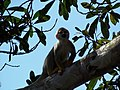 Fauna Amazônica.jpg