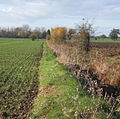 Field boundary WSW from Stonham Road - geograph.org.uk - 612373.jpg