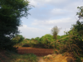 Fields and forests Pakistan.png