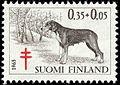 Finnish-Hound-1965.jpg