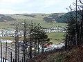 Fir trees above Clarach - geograph.org.uk - 1166649.jpg