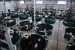 Fish Stock 160509-F-LQ965-210.jpg