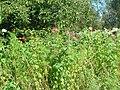 Fleur (Angiosperms) (25).jpg