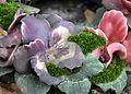 Fleurs de cimetière 29 01 2011 C 14.jpg