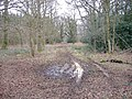 Flisteridge Wood - geograph.org.uk - 324538.jpg