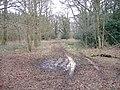 Flisteridge Wood - geograph.org.uk - 324538.jpg