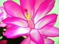 Flores - panoramio (2).jpg