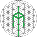 Flower-of-life (1).png