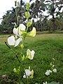 Flower1228.jpg