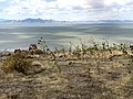 Flowers at the Great Salt Lake.jpg