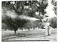 Fog spraying trees, Upper Moutere.jpg
