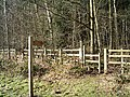 Footpath Into Chantry Wood - geograph.org.uk - 336242.jpg