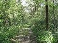 Footpath NE through Hog Wood - geograph.org.uk - 1417203.jpg